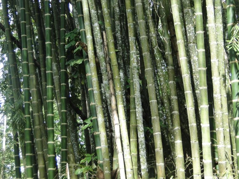 Amo el bambu