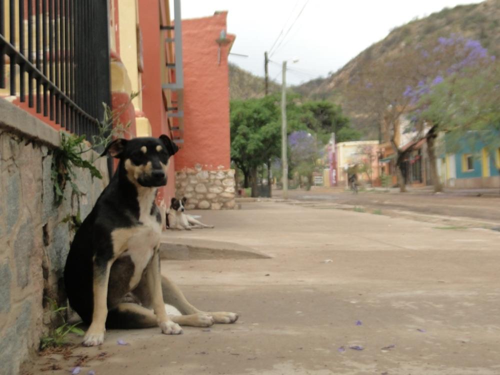 Perros perros y perros